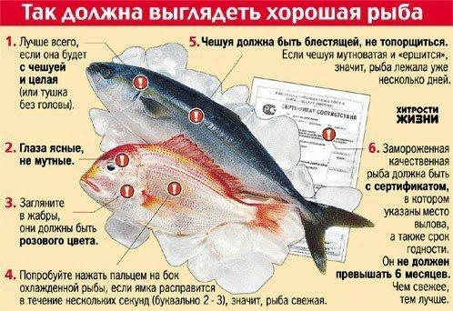 Как выбрать рыбу инфографика